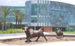 University of South Florida-3